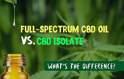 Broad Spectrum CBD Oil for Dogs