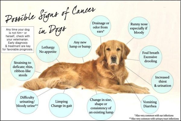 CBD for Dogs with Cancer