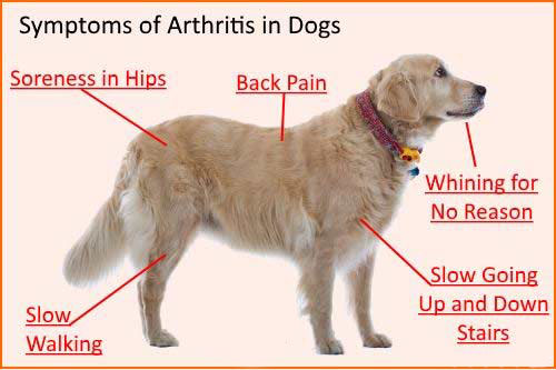 CBD for Dogs with Joint Pain